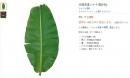 Lá chuối được bán với giá 500.000 đồng: Người Việt ở Nhật nói gì?