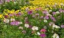 Thung lũng vạn hoa ngay tại Hà Nội - Địa chỉ 'sống ảo' ngày tết