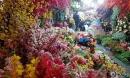 Chợ hoa Hàng Lược rực rỡ muôn màu, chưa đi là chưa thấy Tết Hà Nội
