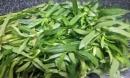 Ít ai biết loại rau phổ biến khắp Việt Nam có tác dụng chữa bệnh như tiên dược