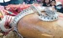 Vụ mẹ con rắn nằm trên mộ của 'bà ăn mày': Dân tái căng lều bạt, tiếp tục cúng bái
