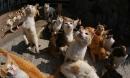 Hội những người yêu mèo chắc chắn sẽ phát cuồng khi đặt chân tới hòn đảo này