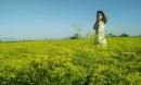 Chẳng nỡ rời chân trước cánh đồng hoa thì là đẹp mơ màng ở Ninh Thuận