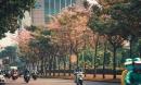 Không ngờ giữa Sài Gòn lại có những con đường hoa đẹp đến thế này!