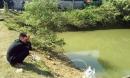 Ba bé trai chết đuối thương tâm dưới ao cá