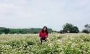 Lạc bước ở vườn hoa tam giác mạch đầu tiên ở miền Tây xứ Nghệ