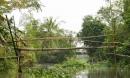 Cầu khỉ Việt Nam nằm trong top 15 cây cầu đáng sợ nhất thế giới