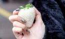 Dân Việt lùng sục dâu tây trắng 200.000 đồng/quả nhưng vẫn không có mà mua