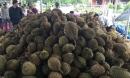 Chuyện lạ: Sầu riêng 19.000 đồng/kg, dân ùn ùn kéo đến ăn thả ga