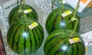 Dưa hấu Luna Piena đắt gấp 145 lần dưa hấu Việt vẫn đắt hàng