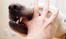 Hà Nội: Bé gái 8 tháng tuổi bị chó nhà 40kg cắn tử vong ngay trước mặt mẹ