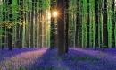 Choáng với những khu rừng 'dị' đầy ma quái