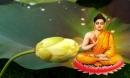 7 bài học Phật dạy cần ghi nhớ để được hưởng Phúc Đức muôn đời