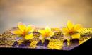 Phật dạy: dù nghèo khó đến đâu nếu làm được 3 việc này cũng sẽ giàu có và phúc lớn