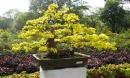 Vào dịp giáp Tết, nhất định phải đặt 5 loại cây phong thủy này trong nhà để rước thần tài - đón quý nhân