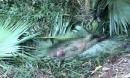 Vào rừng tìm bò, người đàn ông nghi bị đàn voi quật tử vong