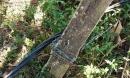 Đi qua hàng rào có dây điện, hai vợ chồng tử vong thương tâm