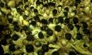 10 nghìn thanh niên cởi trần lao vào nhau tìm 'gậy thánh' trong lễ hội cầu may tại Nhật Bản