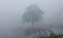 Sương mù giăng kín lối, Tam Đảo đẹp tựa trời Âu