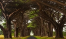 Rừng cây đan kín tạo thành đường hầm bí ẩn giữa lòng nước Mỹ