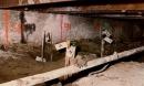 Căn hầm đầy xương người và tội ác của kẻ lấy vợ để che giấu giới tính: Căn hầm bí mật