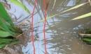 Ra đồng bón phân, người phụ nữ ở Thái Bình dính bẫy điện tử vong