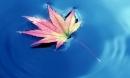 Con người ở đời: Hãy sống linh hoạt như nước và làm việc như núi