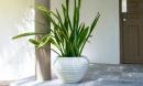 'Bảng vàng' 8 loại cây cảnh lọc sạch khí độc, hút cả bức xạ trong nhà, bảo vệ cả gia đình