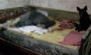 Ông lão độc thân chết vì lạnh, chú chó trung thành túc trực cạnh bên hơn 12 tiếng không rời