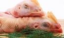 3 bộ phận của gà nhiều người thích nhưng chứa nhiều chất độc, gây hại cơ thể