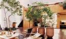 4 vị trí trong nhà nên đặt cây phong thủy để tăng tài vượng lộc, xua đuổi vận đen