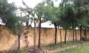 Nam học sinh lớp 9 ở Hải Dương tử vong do điện giật trong khi lao động tại trường