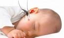 """Trẻ sơ sinh bị muỗi đốt """"chuyện nhỏ"""" nhưng hậu quả to"""