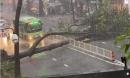 Người đàn ông tử vong vì bị cây cổ thụ ngã đè sau cơn mưa lớn