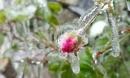 Không khí lạnh tăng cường mạnh, miền Bắc có nơi dưới 5 độ C