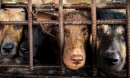 Từ 20/4/2021, đánh đập, hành hạ tàn nhẫn với vật nuôi sẽ bị phạt nặng