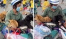 Chủ của 15 chú chó bị tiêu hủy: 'Tôi chỉ biết gạt nước mắt, cố gắng không nghĩ ngợi nhiều nữa'