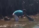 Video chàng trai hôn cá sấu