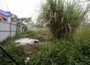 Hàng loạt siêu dự án 'hoàng gia' của Tân Hoàng Minh để nuôi cỏ?