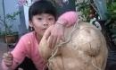 Choáng với củ đậu nặng 21kg ở Hà Nội