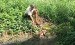 Cà Mau Ngạt thở bên khu công nghiệp ô nhiễm