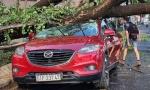Cây xanh bật gốc đè nát ô tô trong 'khu nhà giàu' ở Sài Gòn, tài xế hoảng loạn kêu cứu