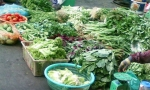 Nguy cơ nhiễm hóa chất từ rau ngót, rau muống và rau mùng tơi