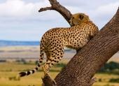 hap-dan-du-lich-kenya-voi-benthanh-tourist-105957.html