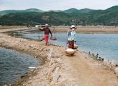 den-sa-huynh-khong-chi-co-muoi-113352.html