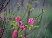 top-5-ca-khuc-mung-xuan-kinh-dien-nhat-moi-thoi-dai-126970.html