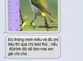 http://xahoi.com.vn/cuoi-be-bung-voi-tin-nhan-che-hai-huoc-p28-154066.html