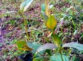 mau-thuan-gia-dinh-thai-phu-an-la-ngon-tu-van-143742.html