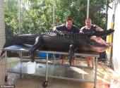 ca-sau-khong-lo-nang-gan-350kg-duoc-tho-san-bat-bang-tay-khong-187837.html