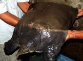 con-cua-dinh-nang-235-kg-vuong-cau-ngu-dan-195345.html